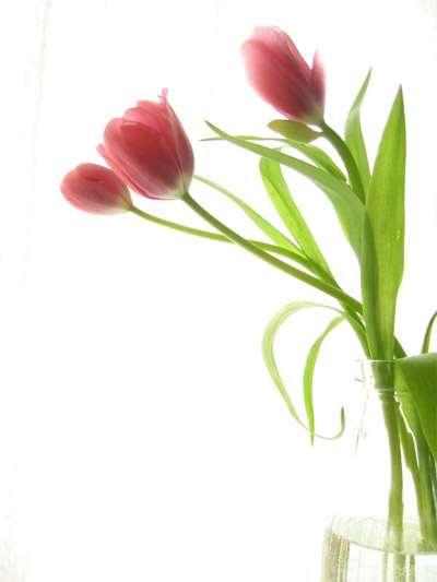 Canadian Freebies: Free Flowers from Flower Bulbs