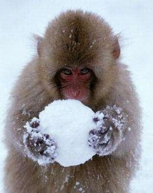 monkey_and_snowball.jpg