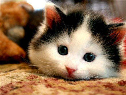 Cute Pet Contest Canada