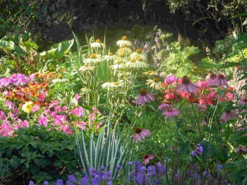 Home depot canada bogo perennial plant printable coupon for Perennial flower garden designs