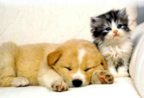 dogs-and-cats2