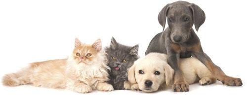 Pet Valu Dog Food Brands Canada