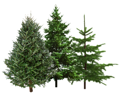 thanks to brenda crown for tipping us off that some ontario walmart stores are selling christmas trees for just 1 and moon18 for confirming the deal