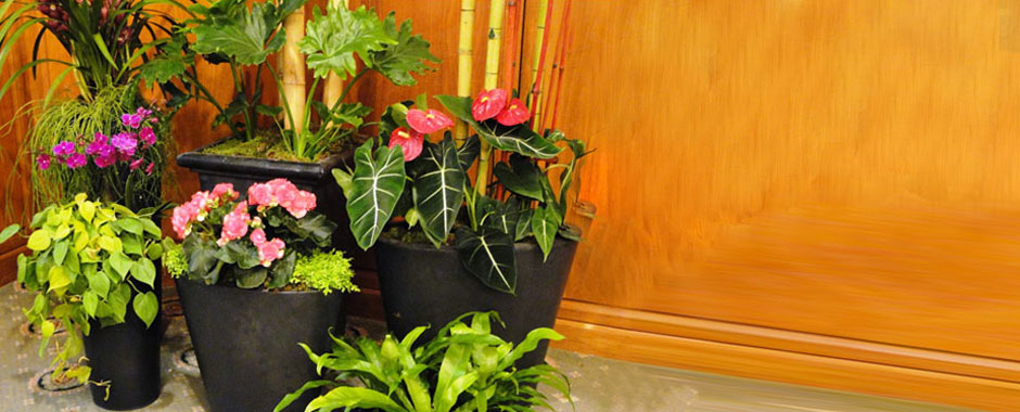 Save 5 On 10 Tropical Plants At Home Depot Printable