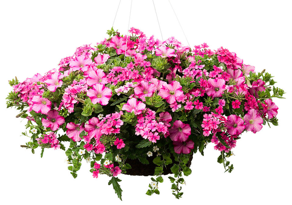 Hanging Flower Baskets Home Depot Canada : Home depot save on any proven winner hanging basket or