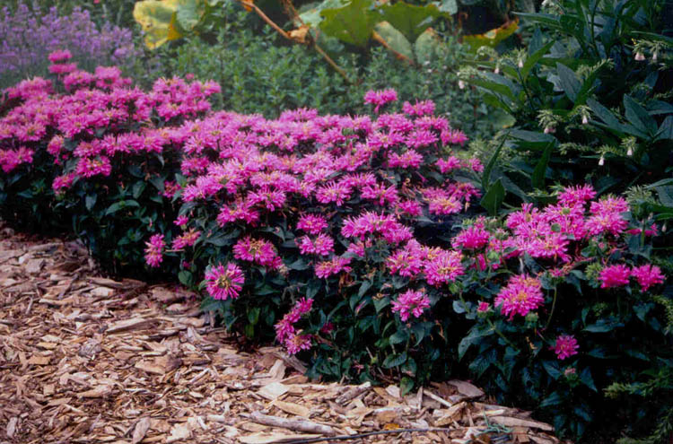 Home depot canada save 2 on perennials printable coupon for Best low maintenance plants for shade
