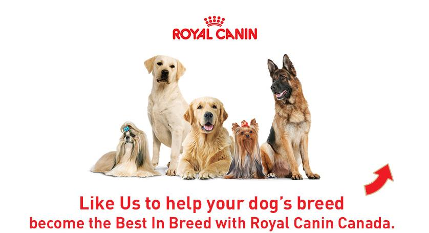 photo relating to Royal Canin Printable Coupon named Royal Canin Canada: Help you save $10 upon Breed Fitness Vitamins