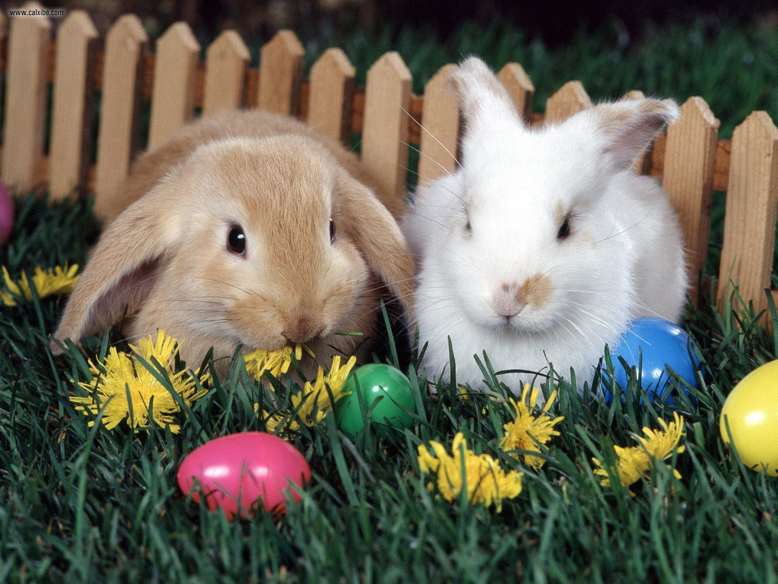 Walmart canada clearance great deals on easter gift ideas free 8808386 easter bunny eggs negle Gallery