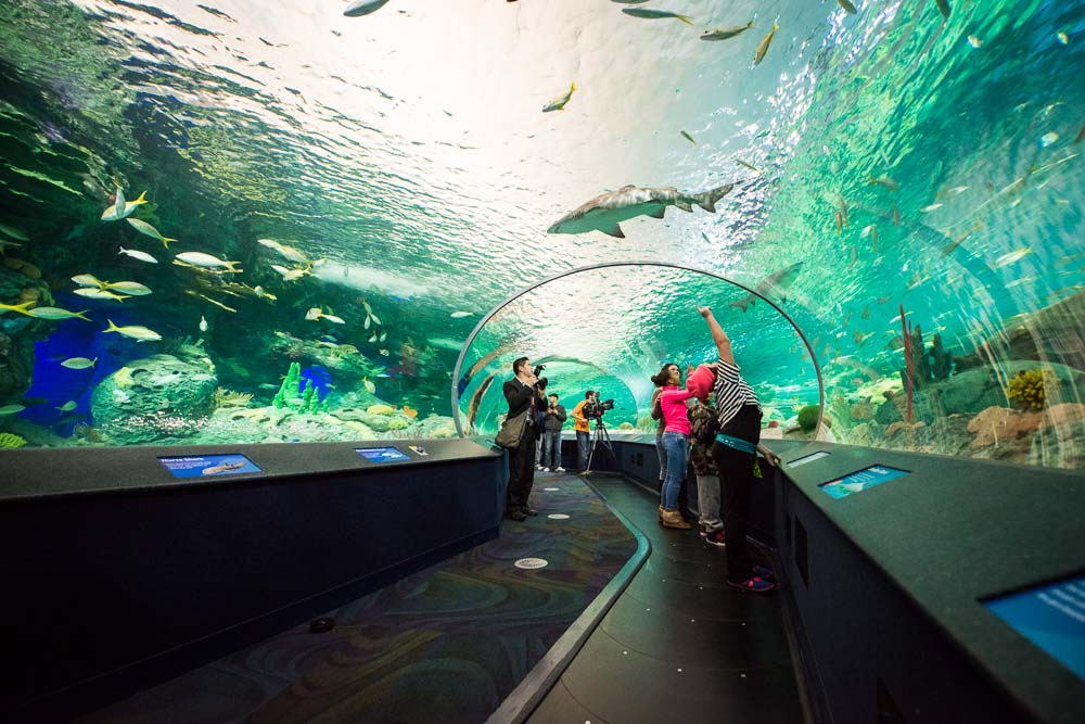 Texas Aquariums