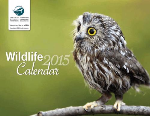 Screen Shot 2014 08 26 at 3.44.49 PM 500x389 Canadian Wildlife Federation Freebie: FREE 2015 Calendar TODAY!