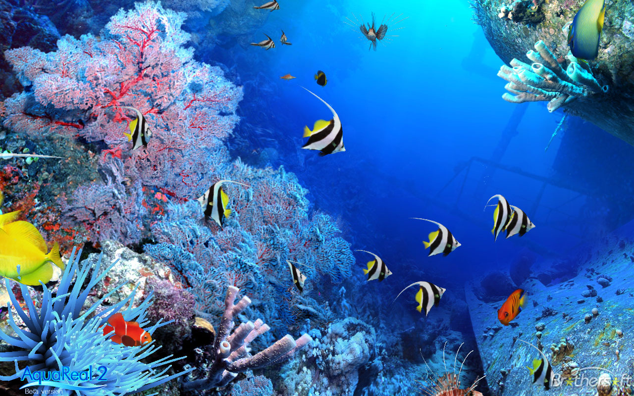 Big al s fish aquarium canada black friday 2014 sales and for Fish tank deals