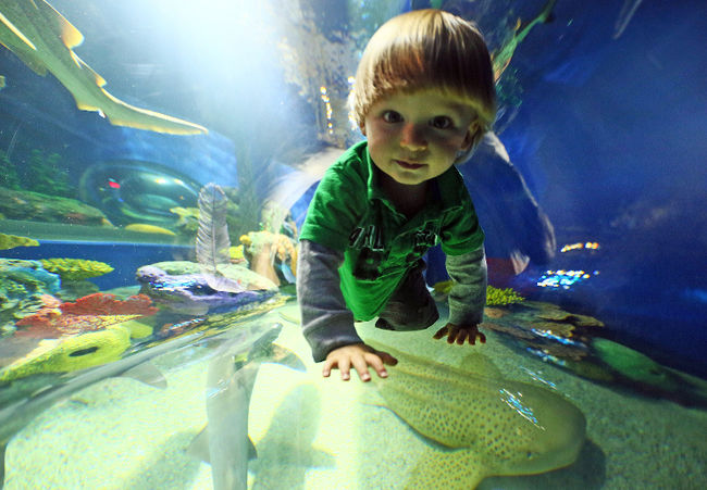 Browse our current offers at Delta Hotels Toronto. Discover hotel specials, weekend packages and discounts on local attractions, like Ripley's Aquarium.