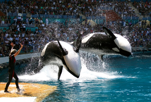 Marineland Canada Deals: BMO Family Days Tickets Only $26 ...