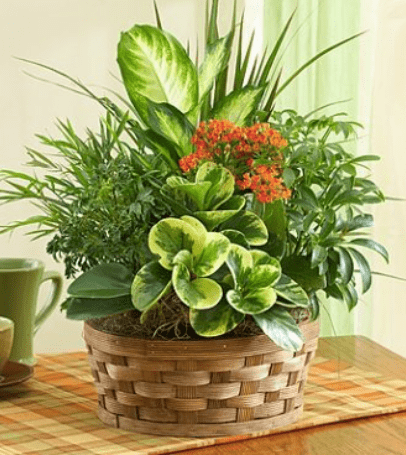 1800-flowers-canada-fathers-day-arrangement