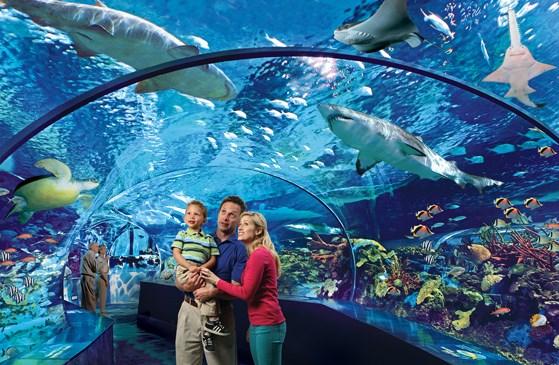 Ripley S Aquarium Canada Deal Students Save 50 Off