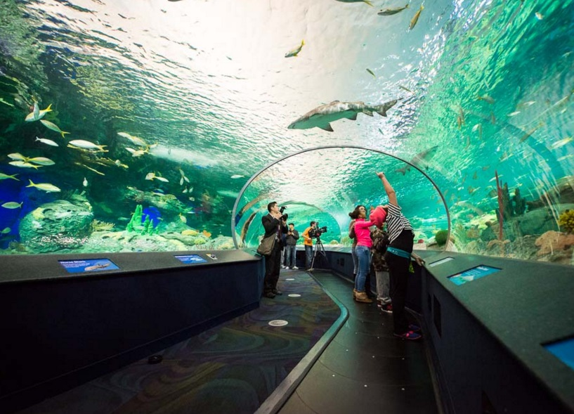 Ripley's aquarium coupon code