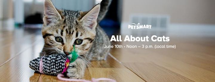Petsmart All About Cats